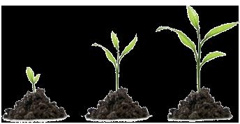 Pflanzen Wachstum Venios Vereinigt It Und Energie